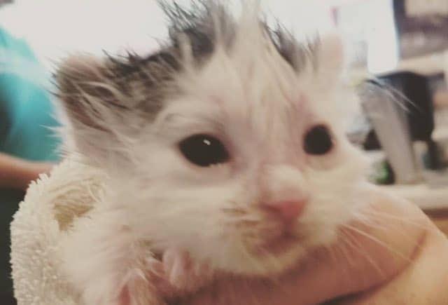 Groomer Raises a 2-day-old Kitten Like Her Own 4