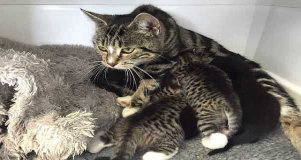 Loving Cat Mother Tracks Down Her Missing Kittens