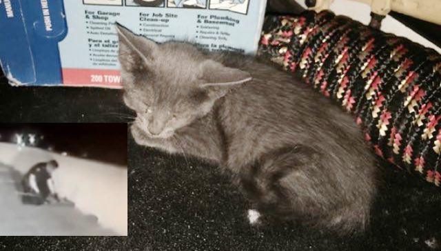 Police Officer Saves Meowing Kitten Stuck on Highway and Changes His Life Forever!