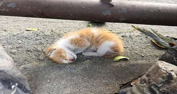 Kitten Left on The Side of a Road to Die, is Saved