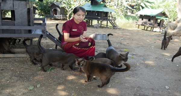Cat-Hater Who Has Surrounded Herself With Cats