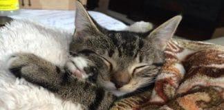 Newborn Kitten Surprised Family When They Found Her on Porch