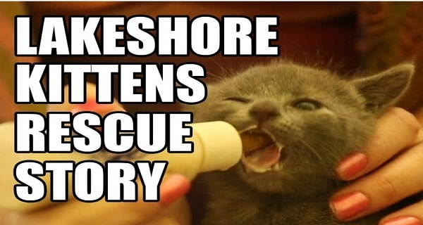 Baby Kittens Found Inside An Industrial Dumpster