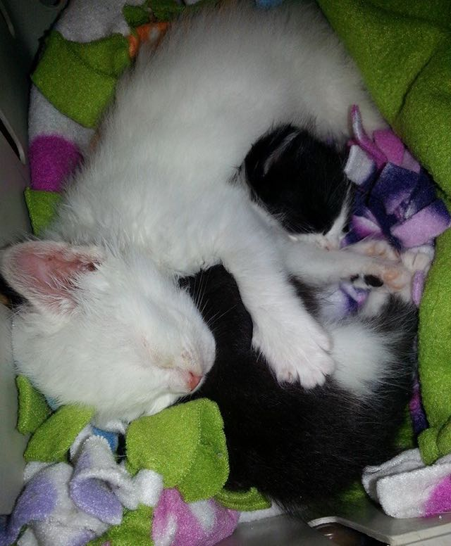 Orphan Kitten 1