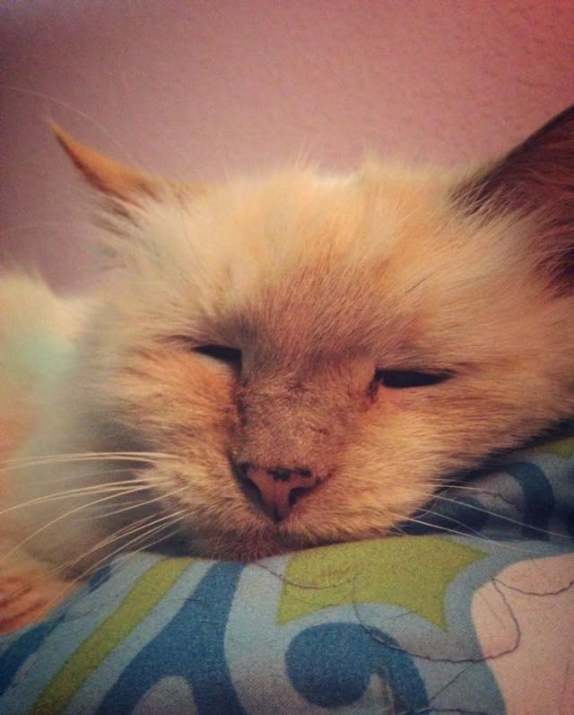 17 Year Old Abandoned Cat Tells Her New Family How Grateful She Is For Them Every Day 1