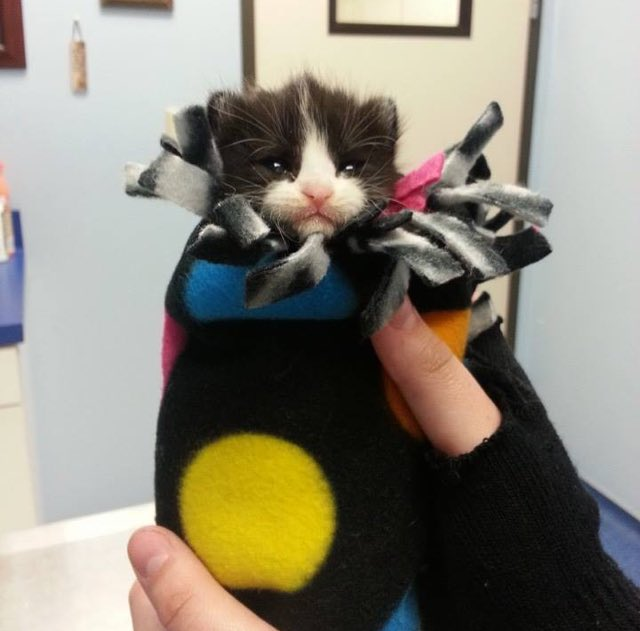 Orphan Kitten 3