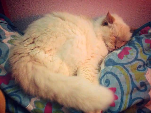 17 Year Old Abandoned Cat Tells Her New Family How Grateful She Is For Them Every Day 3