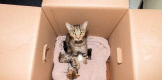 Family of Kitties Found Discarded in a Box