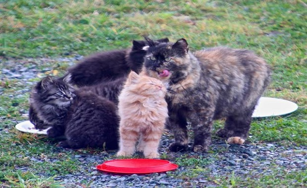 It Took A Man Months to Save Four Feral Kittens and Their Mama