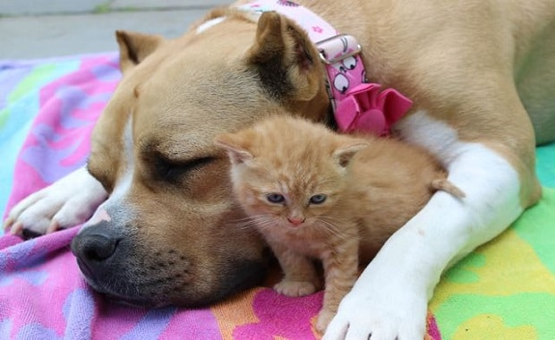 Rescue Dog Becomes New Mom To Homeless Kittens
