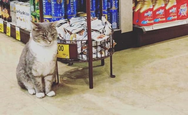Cat Named Cecil Comes to a Store Every Morning to Hang out with Customers