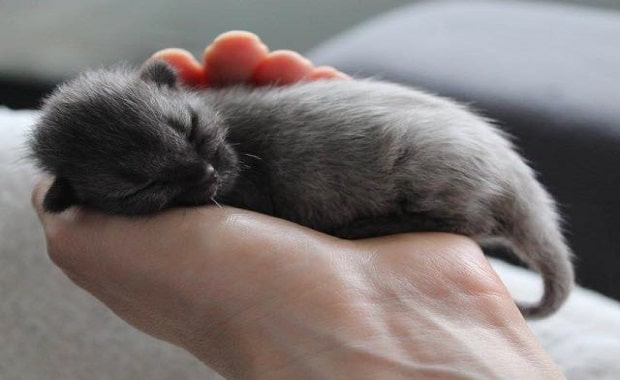 Days Old Kitten Crawling on Roadside is Saved by Love