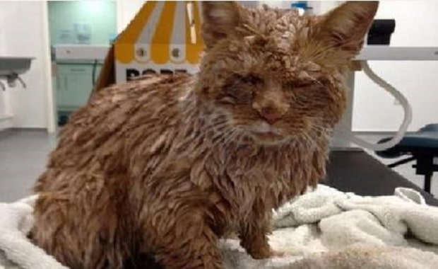 Cat Found Covered In Concrete Needs Our Prayers