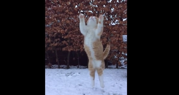 Swakke the Cat Catches Snowball in Slomo