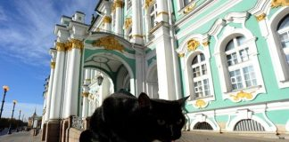 The History of Russia's Hermitage Cats