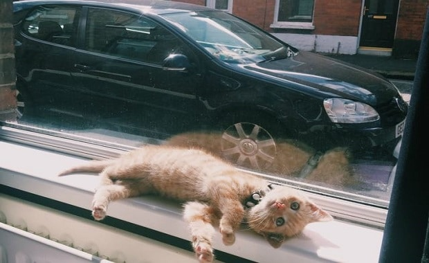 A Couple Saw Ginger Kitten Wander into Traffic And Jumped To Help Since No One Else Would