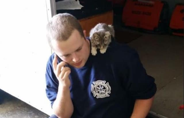 Tiny Kitten Wanders Into Fire Department Meowing For Help