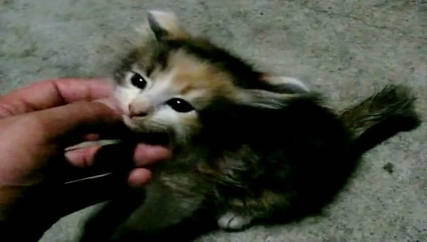 Feral Kitten Feels Loved for the Very First Time