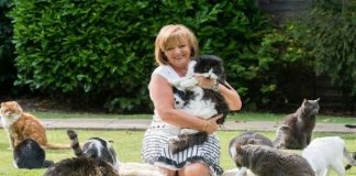 Woman Spends $142,000 a Year Caring for Abandoned Cats. Her Husband Says ....