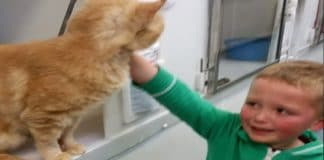 Boy Finds Long-Lost Cat at Shelter
