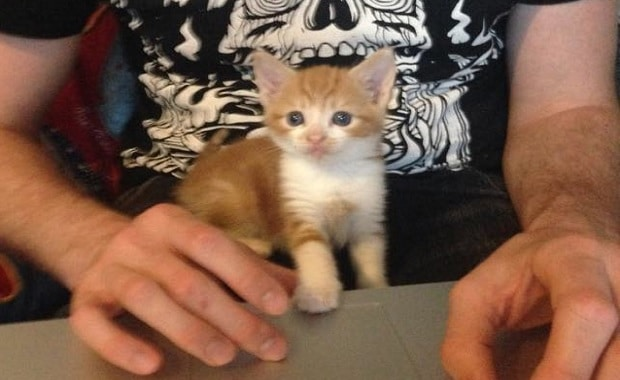 Man Changes a Kitty's Life from Abandoned to the Most Spoiled Lap Cat!