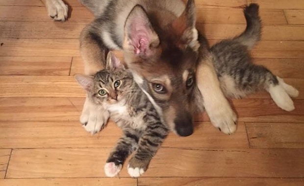 What Happens When You Let Your Puppy Choose The New Kitty