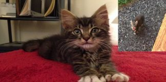 Cat Goes from Stray Hiding Under a Shed to the King of the House!