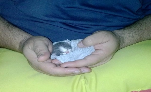 Big Guy Saves Tiny Kitten and Becomes Surrogate 'Mom'