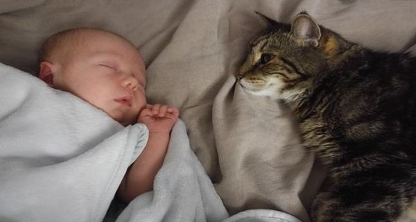 Cat Waited 9 Months to Meet His New Buddy For The First Time