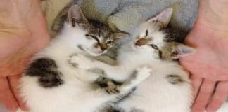 Kittens Found on Highway Wrapped in Blanket And Saved by Kindness