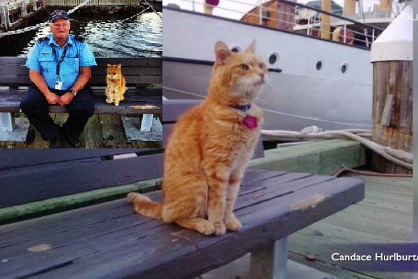Cat Started As a Stray, Ended up Ship's Mouser!