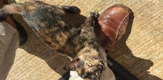 STRAY TORTIE CHOSES HER HUMAN OUTSIDE FACTORY DOOR