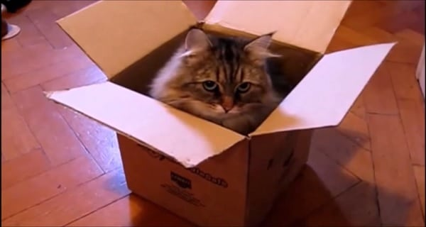 Cats in Boxes Compilation | Cute cats playing | 2015