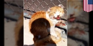Man Saves a Cat From Freeway When No One Else Cared - WATCH THE DRAMATIC RESCUE VIDEO