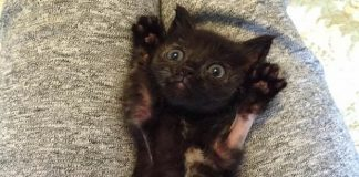Googly Eyed Kitten Found Behind an Old Refrigerator And The Amazing Comeback!