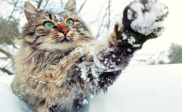21 Cats Who Simply Love Playing in the Snow