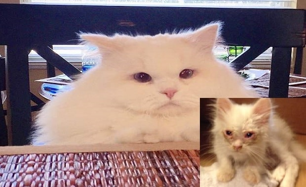 Cat Found on Roadside And The Glorious Transformation