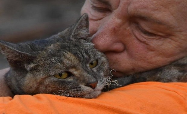 Cat Who Survives Massive Wildfire and The Magical Reunion With Her Family