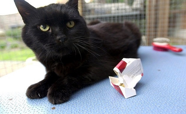 Smoking More Damaging to Our Cats Than To Our Dogs
