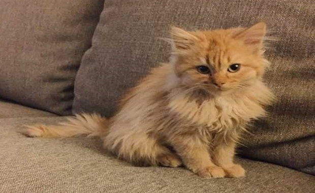 Shelter Kitten Waited and Waited For A Forever Home and Then …