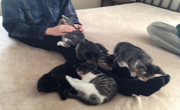 """Greensboro College Professor Saves Mama Cat And Her 5 """"Very Special"""" Kittens"""