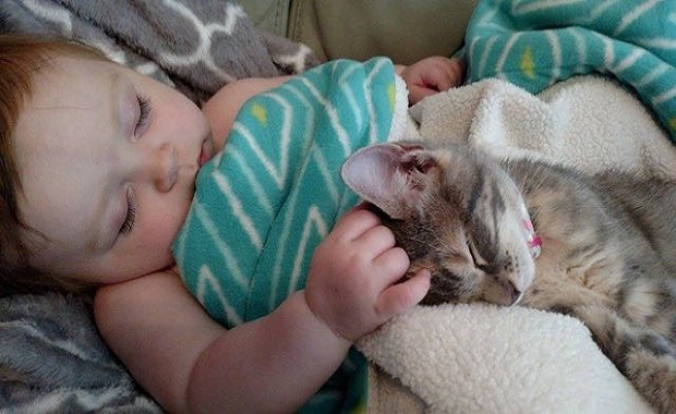 Tiny Kitten and Her Little Baby Sister Waking Up Together from a Nap