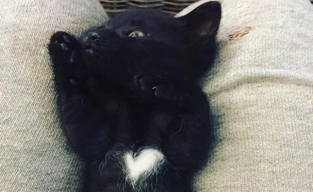 Man Saves Days Old Black Kitten In His Driveway