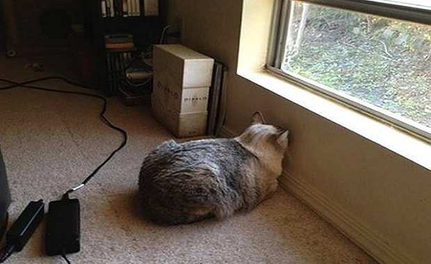 Your Cat Is Pressing Its Head Against Walls and Other Objects?