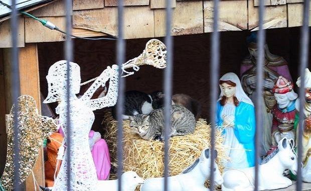 Cats Take Over Christmas at Brooklyn Nativity Scene