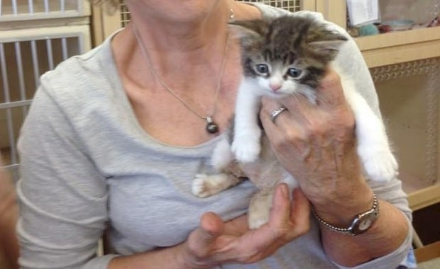 Though This Special Kitty Needs to Wear a Diaper, He's the Happiest and Sweetest Cat …
