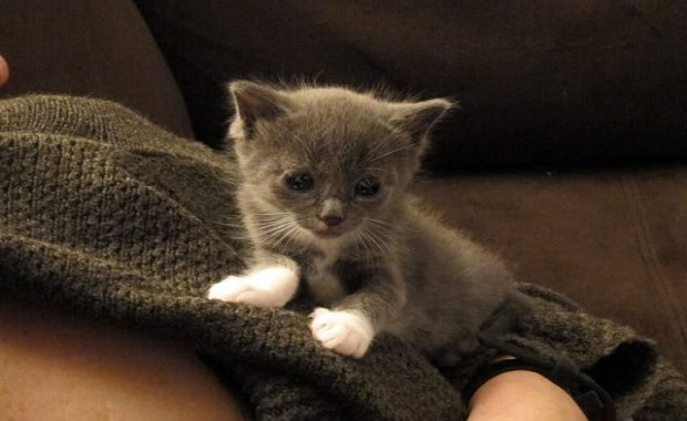 Motherless Kitten Adopted by a Furry Family