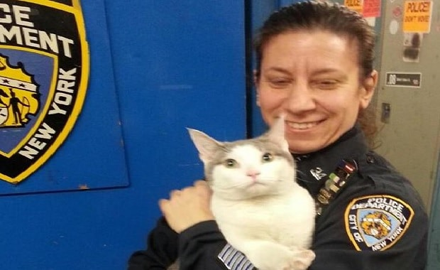 Cat Wandered into a Police Station in New York And Didn't Want to Leave