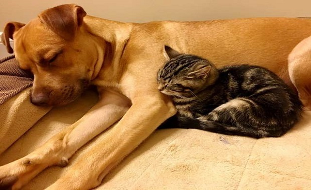 Rescue Mama Cat Has 5 Kittens And It Becomes One Big Happy Family, Dogs Included!