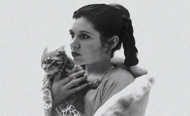 STAR WARS AS REIN-ACTED BY CATS